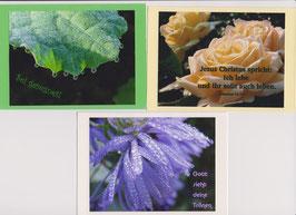3 verschiedene Foto-Faltkarten: SEI GESEGNET
