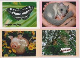 4 verschiedene Foto-Faltkarten: EINFACH TIERISCH