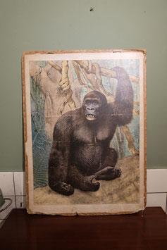 Schoolplaat gorilla  |  19.929.O