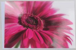 Grußkarte - Pink Gerbera
