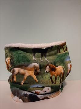 Colsjaal horses