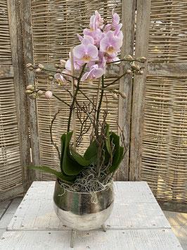 Orchidee rosa im Silbergefäß