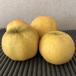 Pommes  variété Belchard