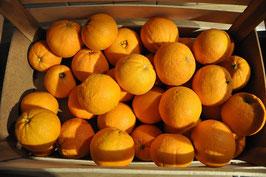 Orangen / 1 Harasse à ca. 20 KG