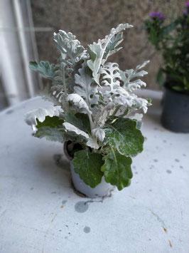 Silber Winterblatt