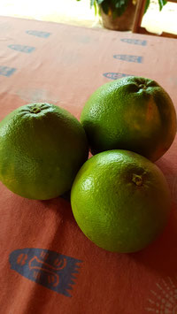 GRAPEFRUITS fresh from the tree - 100% ORGANIC and NATURAL