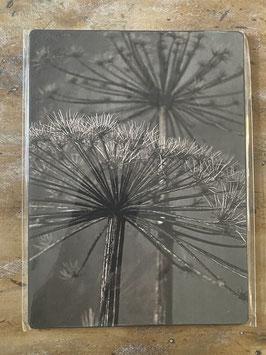 Nostalgisches Foto Allium