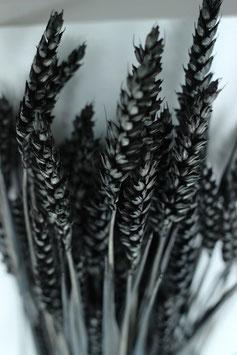 Trockenblume Weizen schwarz