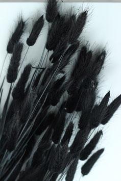 Trockenblume Lagurus schwarz