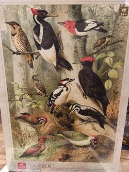 Puzzle 1000 Pièces Encyclopedia - Oiseaux