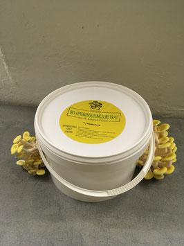 Limonenseitling Substrateimer