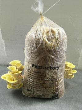 Limonenseitling Substratsack