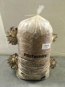 Austernseiting Substratsack