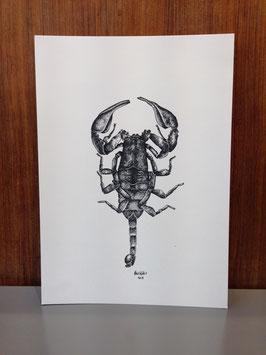 """Druck """"Skorpion"""""""