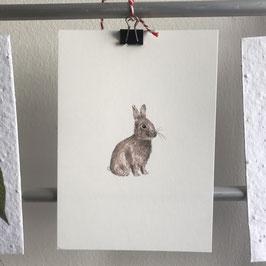 Postkarte - Kaninchen - Farbe