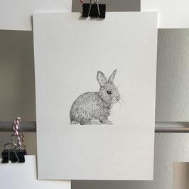 Postkarte - Kaninchen