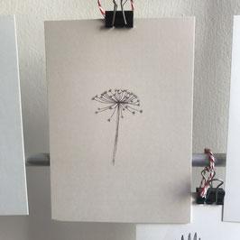 Postkarte - Bärenklau