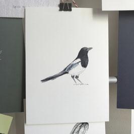 Postkarte - Elster