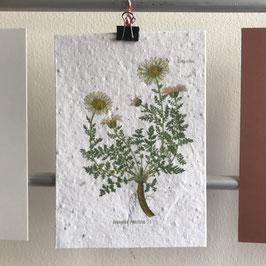 Postkarte aus Samenpapier - Bertram