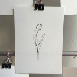 Postkarte - Tulpe