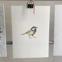 Postkarte - Kohlmeise