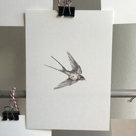 Postkarte - Schwalbe
