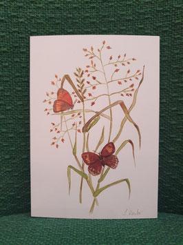 "Postkarte Menker ""Schmetterlinge im Gras"""