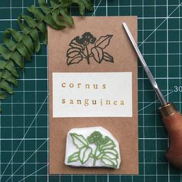 """Petit tampon """"Cornouiller sanguin"""" (Cornus sanguinea)"""