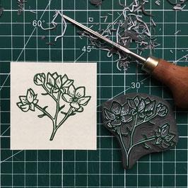 """Tampon """"Rose"""" (Rubus armeniacus)"""