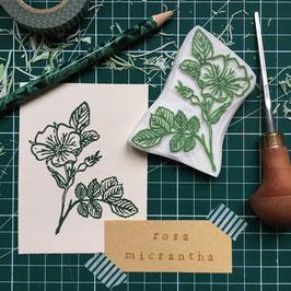 "Tampon ""Rose"" (Rosa micrantha)"