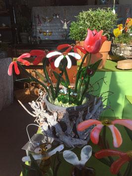 Frösche, Margerite, Tulpen und Libellen