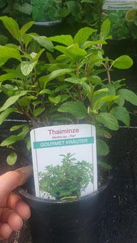 Thaiminze
