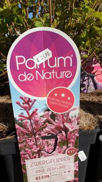 Zwergflieder Pink Parfume