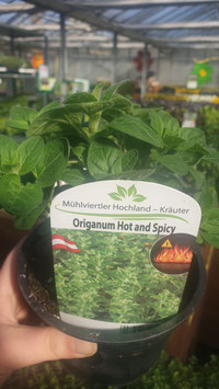 Oregano Hot and Spicy