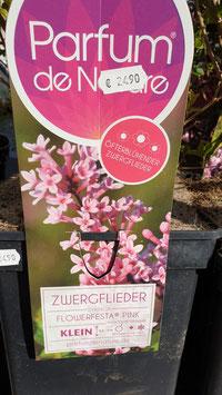 Zwergflieder Flowerfesta PINK