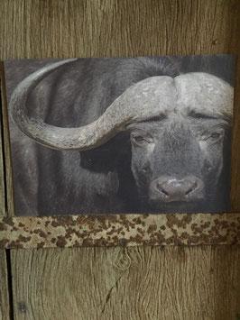 Kaart Buffel