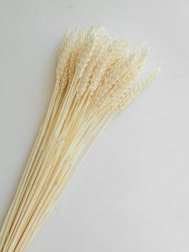 Getrocknetes Weizen- Gebleicht