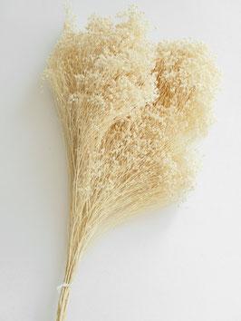 Getrocknetes Broom Bloom