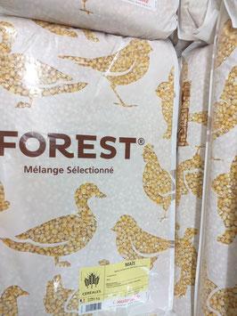 MAIS FOREST
