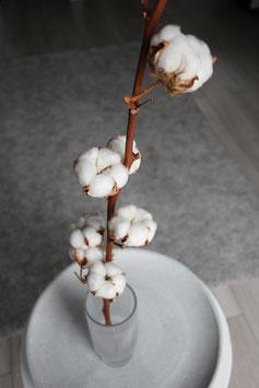 Baumwolle Stiel natur