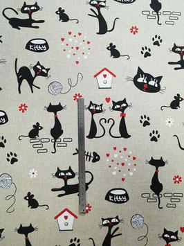 Chats souris noirs