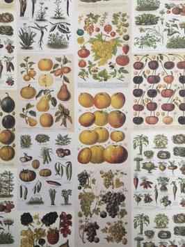 Frutas y verduras vintage