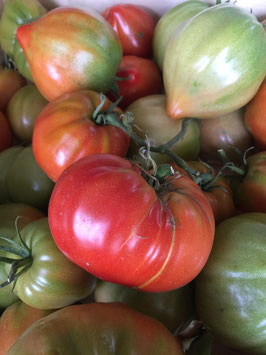 Tomate rouge le Kg