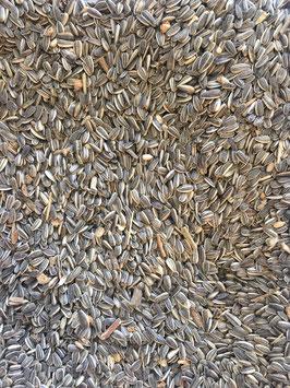 Meisenfutter Sonnenblumen-Erdnuss Mix