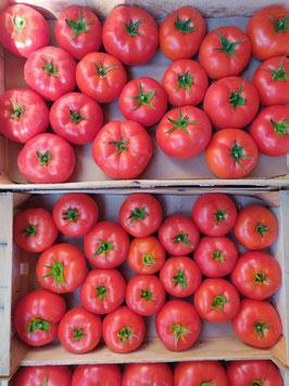 Tomates ronde de Provence