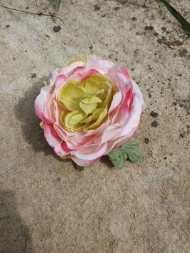 Rose Haarblüte mit Blatt
