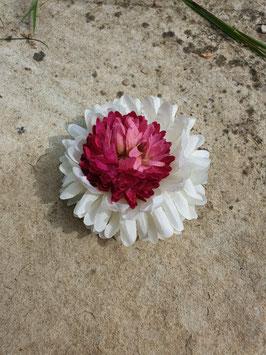 Haarblüte pink-weiß