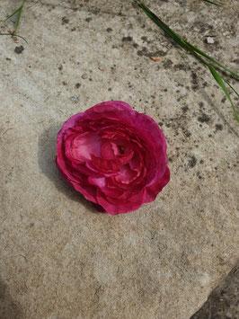 Pinke Haarblüte