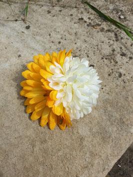 Doppel Haarblüte Gelb Weiß