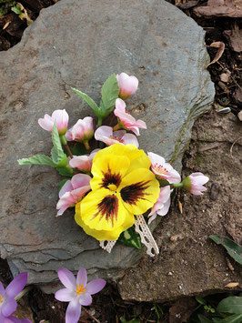 Frühlingsblüte und Stiefmütterchen